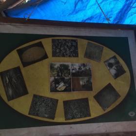 silkworm-life-cycle