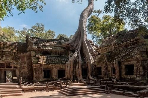 Ta Prohm Tempel - Siem Reap, Cambodja