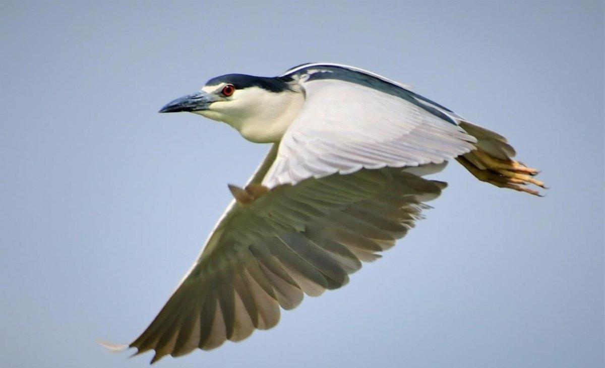 Encontro virtual de observação de pássaros chega a última edição de 2020 com mais de 130 espécies avistadas