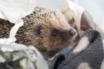 Shepreth Wildlife Conservation Charity