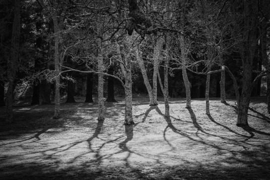 a-winter-shadows-a