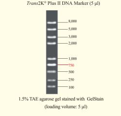 2k plus 11 DNA Ladder
