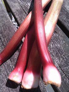 rhubarb-camelcsa-120512