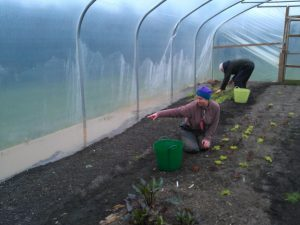polytunnel-flood-camelcsa-140214