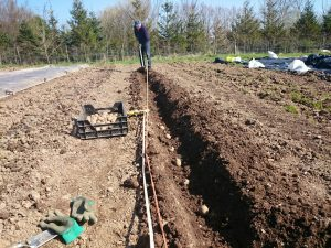 planting-potatoes2-camelcsa-060415