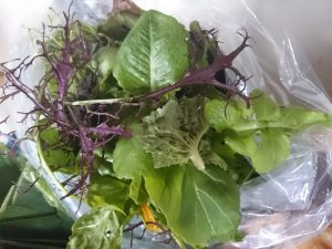 mixed-salad-leaves-camelcsa-040316