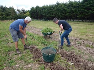 harvesting-potatoes-camelcsa-140716
