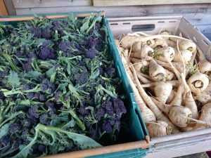 purple-sprouting-broccoli-parsnips-camelcsa-240217