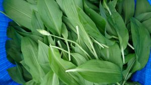 wild-garlic-leaves-camelcsa-130418