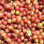 red-dessert-gooseberries-camel csa-290618