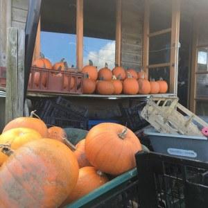 pumpkins-shed-camelcsa-261018