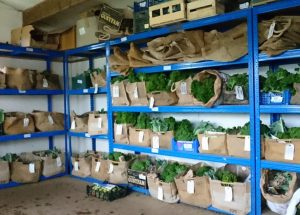 veg-boxes-packing-shed-camelcsa-091118