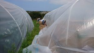 cover-second polytunnel-treraven-camelcsa-4-010819