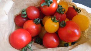 tomatoes-camel-csa-110819