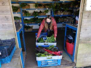 veg-boxes-camelcsa-180920