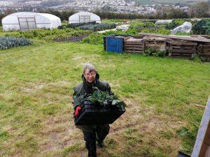 harvesting-kale-stormalex-camelcsa-021020