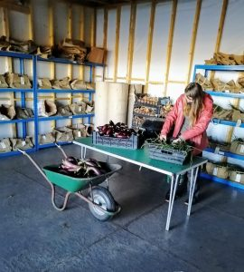 new-veg-packing-shed-camelcsa-171020
