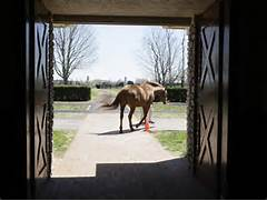bourbon-trail-horse