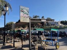 Paseo Burros Taxi