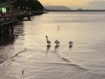 Cairns Pelicans