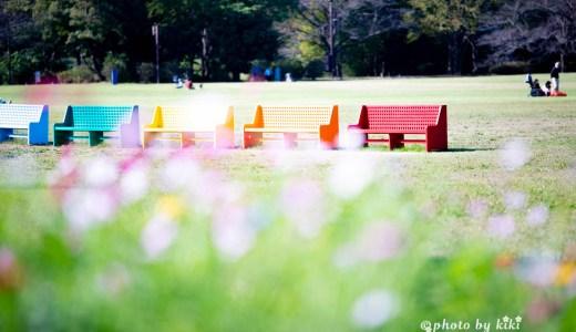 どこでもドアがある!昭和記念公園のコスモス畑