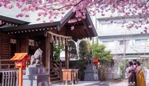 蔵前神社でミモザと早咲きの桜を撮る