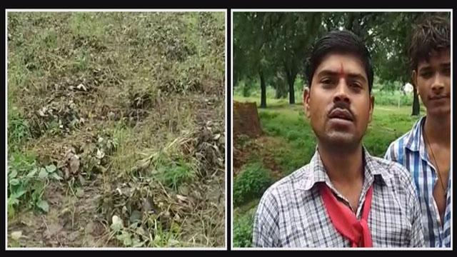 दमोह जिले में भारी बारिश के कारण किसानों की चिंता बढ़ी