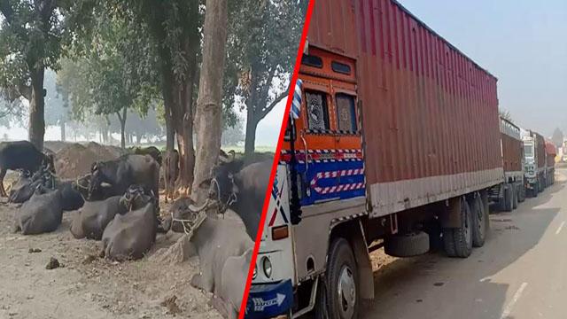 तीन ट्रक और एक कंटेनर से मवेशी बरामद, Kokhraj पुलिस ने की कार्रवाई