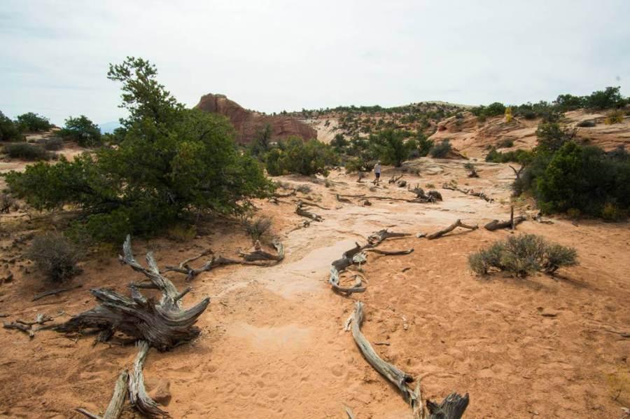 Mesa Arch Trail logs on each side