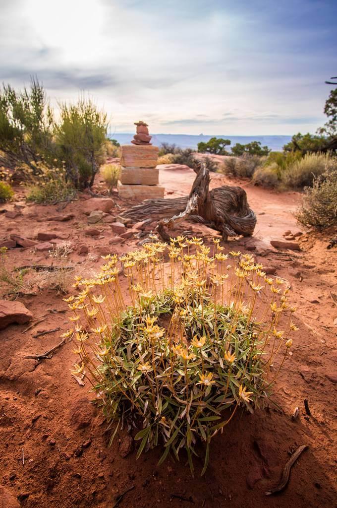 canyonlands plant life