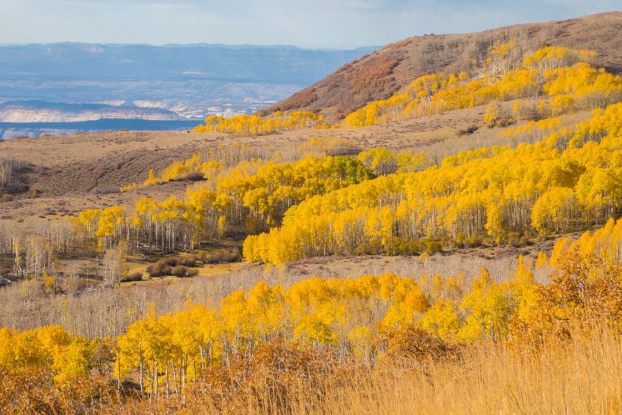 Yellow Aspen trees along Utah route 12