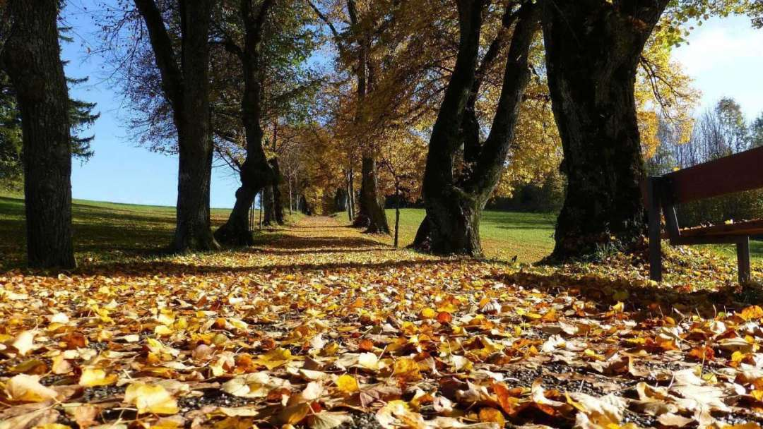 Autumn photography: 01 Try a low angle