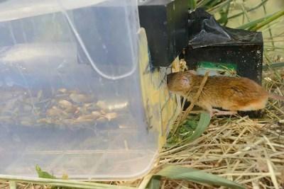 snapshot-5-harvest-mice-nick-upton-northamptonshire-documentary-winner