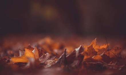 9 quick ways to photograph autumn colours with accuracy