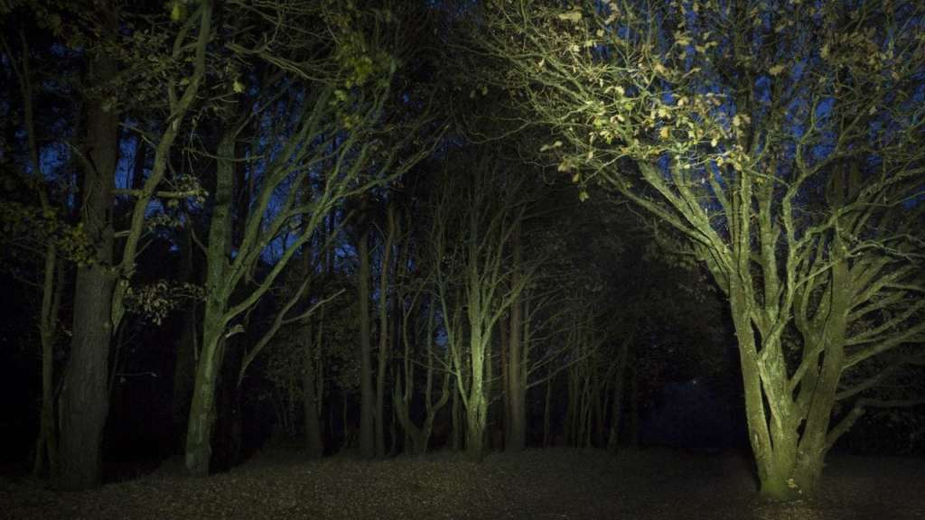 Trees painted with light