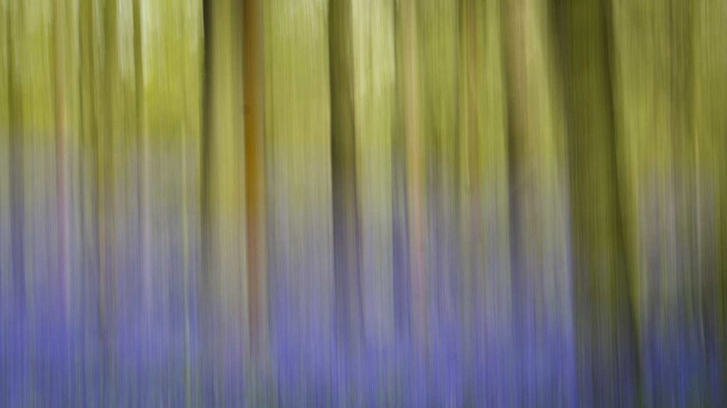 Bluebell wood with Intentional Camera Movement