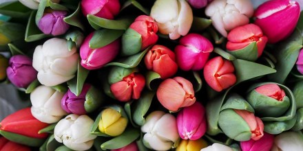 Flower photography: 4 ways to add instant impact to spring images