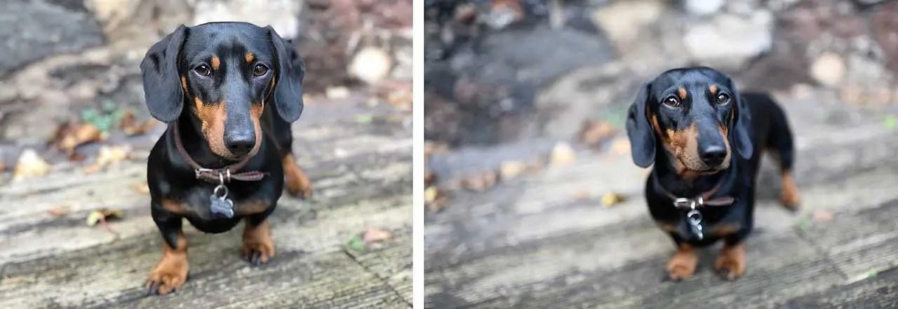iPhone X vs Nikon D850