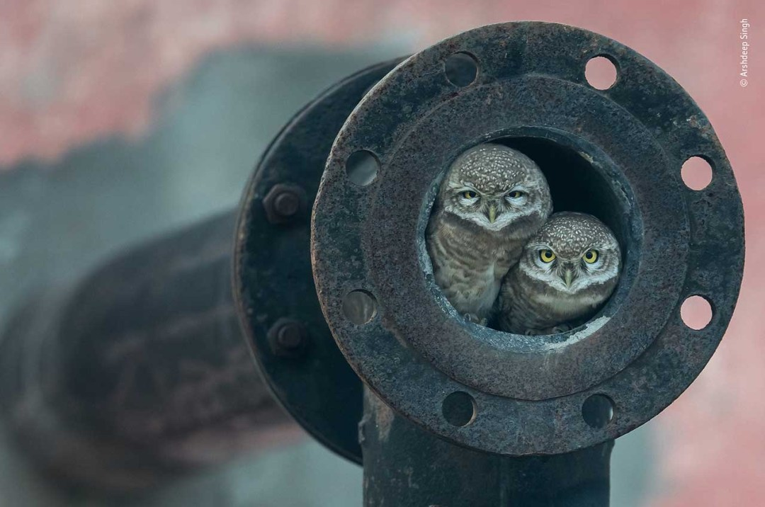 © Arshdeep Singh - Wildlife Photographer of the Year