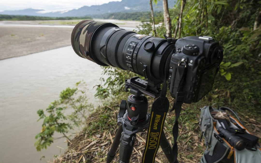 Best cameras for Wildlife Photography: Features you need and which cameras to buy