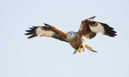 How to photograph birds in flight with a Nikon camera