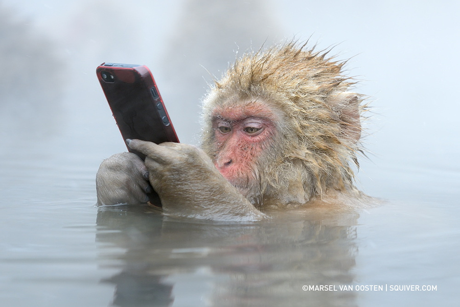 Facebook Update by Marsel van Oosten on 500px.com