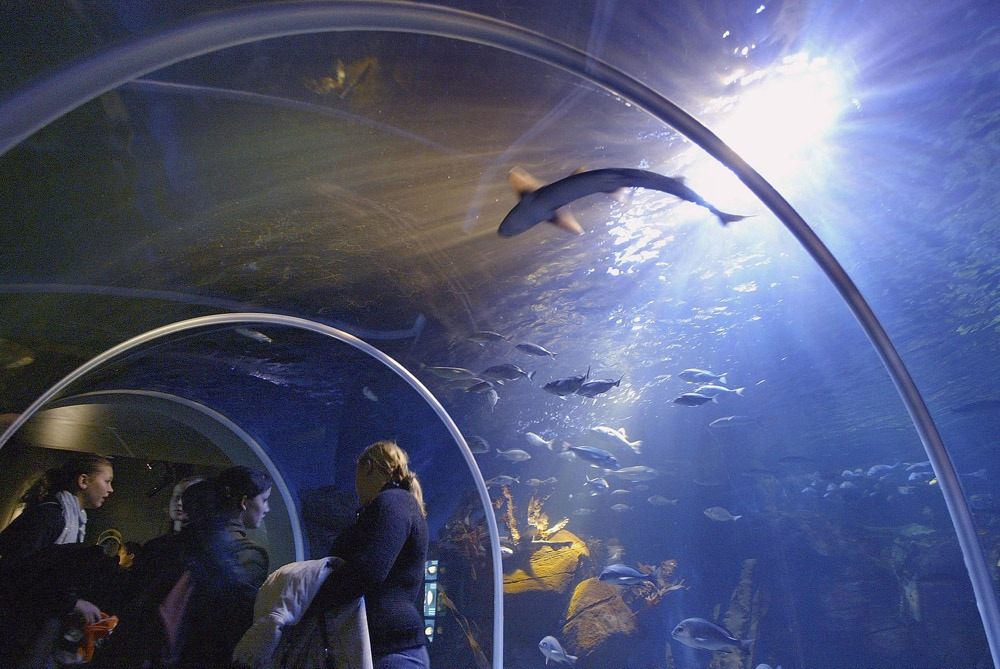 AkvaDom samyy krupnyy akvarium 2
