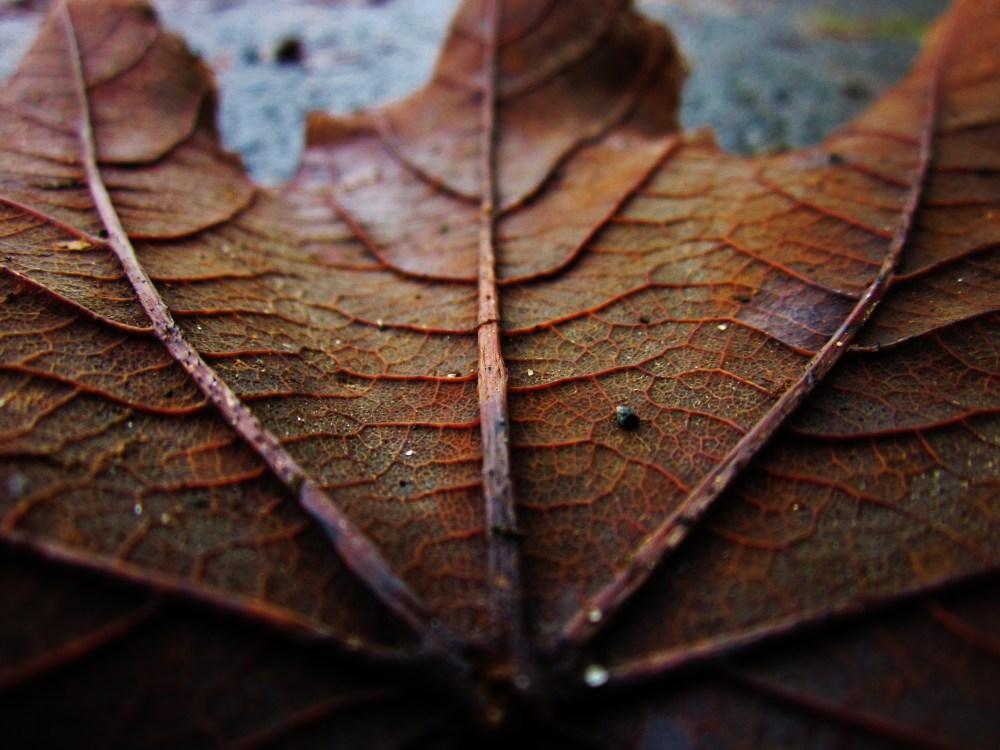 Wet Leaves (2/6)