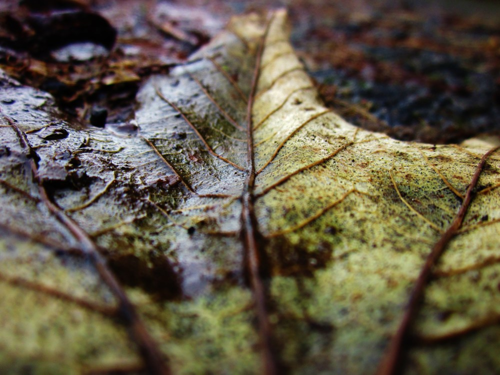 Wet Leaves (4/6)