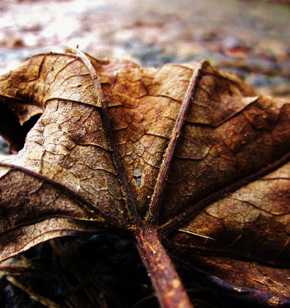 Wet Leaves (5/6)