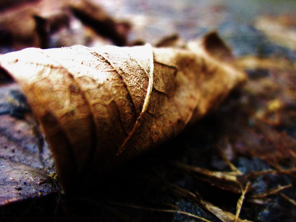 Wet Leaves (6/6)