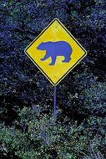 Sign warning about bears, photograph by Lorelle VanFossen