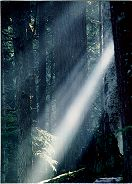 Brent underexposed to accentuate the light streaming through the forest mist. Olympic National Park, Photo by Brent VanFossen