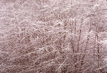 This image of snow covered trees took some care to meter for the details in the trees, photo by Brent VanFossen